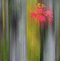 Red Leaves - Abstract by Gary Lengyel