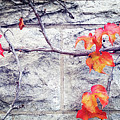 Red Leaves Growing By The Wall. Autumn by Xujing Zhang