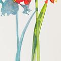 Red Lion by Sandra Neumann Wilderman