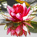 Red Lotus Flower by Jeelan Clark