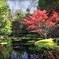 Red Maple by Dawn Gari