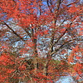 Red Maple Foliage Kaleidoscope by John Burk