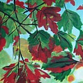 Red Maple by Krista Ouellette