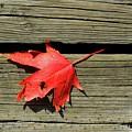 Red Maple Leaf On A Boardwalk  by Lyle Crump