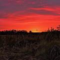 Red Marsh Sunrise by Dale Kauzlaric
