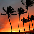 Red Maui Sunset Hawaii by Pierre Leclerc Photography
