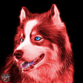 Red Modern Siberian Husky Dog Art - 6024 - Bb by James Ahn
