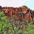 Red Mountains Zion National Park Usa by Chuck Kuhn