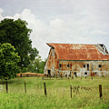 Red Oak Barn by Susan McMenamin