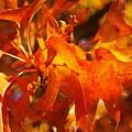 Red Oak Leaf by Denise Irving