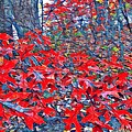 Red  Oak Leaves  by MaryLee Parker