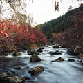 Red Oak Slow River by Mitch Johanson
