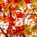 Red On A Tree by Hyuntae Kim