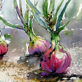 Red Onions Watercolors by Ginette Callaway