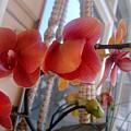 Red Orchid Flowers 01 by Sofia Metal Queen