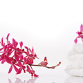 Red Orchid With Towel by Atiketta Sangasaeng