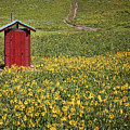 Red Outhouse 6 by Maria  Struss