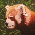 Red Panda 2 by Laura Gabel