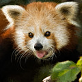 Red Panda by Lana Trussell