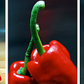 Red Pepper Triptych by Terence Davis