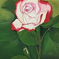 Red-pink Rose by Pushpa Sharma