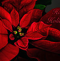 Red Poinsettia Happy Holidays Card by Lois Bryan