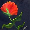 Red Poppie by Lynda McDonald