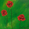 Red Poppies by Cami Lee