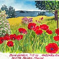 Red Poppies Coastal Maine Island June Garden North Haven  by Catinka Knoth