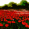 Red Poppies Landscapes Flowers Emerald Isle Multimedia Fine Art by G Linsenmayer