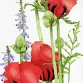 Red Poppies by Linda Hoover