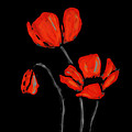 Red Poppies On Black By Sharon Cummings by Sharon Cummings