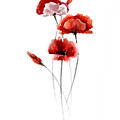 Red Poppy Fine Art Print by Joanna Szmerdt