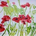Red Poppy Flowers by Derek Mccrea