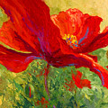 Red Poppy I by Marion Rose
