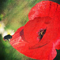 Red Poppy Impression by Angela Doelling AD DESIGN Photo and PhotoArt