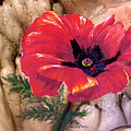 Red Poppy by Sherry Shipley