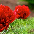 Red Remembrance by DJ MacIsaac