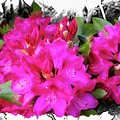 Red Rhododendron Flowers by Rusty R Smith