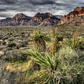 Red Rock Canyon by Joan McDaniel