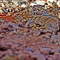 Red Rock Canyon Stones 1 by Chris Brannen