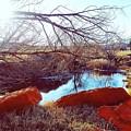 Red Rock by Cheyene Vandament