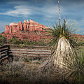 Red Rock Formation In Sedona Arizona by Randall Nyhof