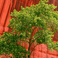 Red Rock Green Tree by Joe Kozlowski