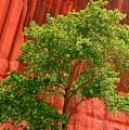 Red Rock Green Tree by Joe Kozlowski