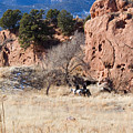 Red Rock Riders by Steve Krull