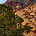 Red Rock Textures by Chris Brannen