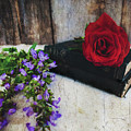 Red Rose And Sage With Vintage Books by Anna Louise