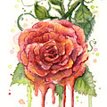 Red Rose Dripping Watercolor  by Olga Shvartsur