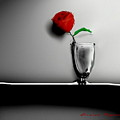 Red Rose by Enrico Ripamonti